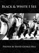 Black & White I See