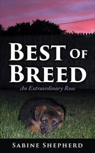 Best of Breed an Extraordinary Rose