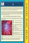 Anatomy For Beginners (Blokehead Easy Study Guide)
