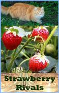 Strawberry Rivals