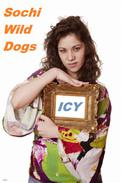 Sochi Wild Dogs