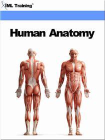 Human Anatomy (Human Body)
