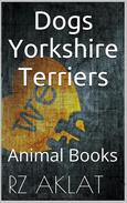 Dogs - Yorkshire Terriers
