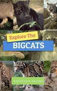 Explore The Bigcats