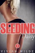 Seeding Daisy