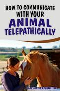How to Communicate with your Animal Telepathically
