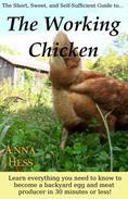 The Working Chicken