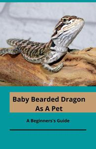 Bearded Baby As A Pet; A Beginner's Guide
