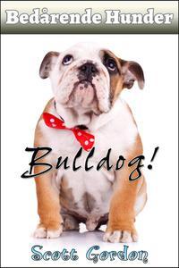 Bedårende Hunder: Bulldog