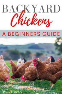 Backyard Chickens: A Beginners Guide