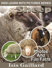 Sheep Photos and Fun Facts for Kids