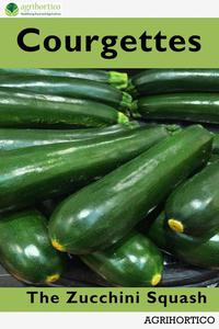 Courgettes: The Zucchini Squash