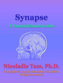 Synapse: A Tutorial Study Guide