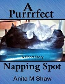 A Purrrfect Napping Spot