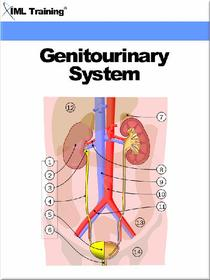 Genitourinary System (Human Body)