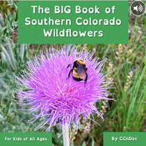 The BIG Book of Southern Colorado Wildflowers